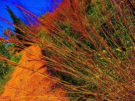 Roadside Weeds by Ingrid Dance