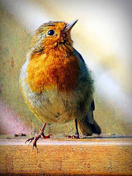 Robin by Lynn Bolt