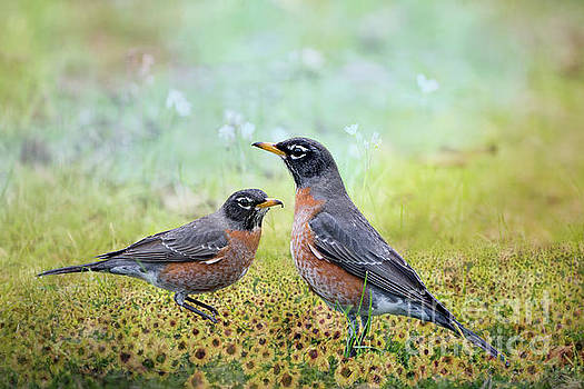 Robins, Heralds of Spring by Bonnie Barry