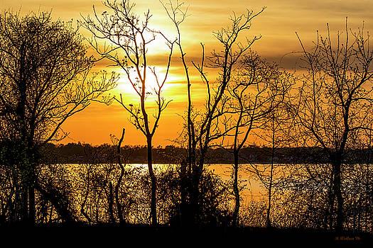 Rock Creek Golden Silhouette by Brian Wallace