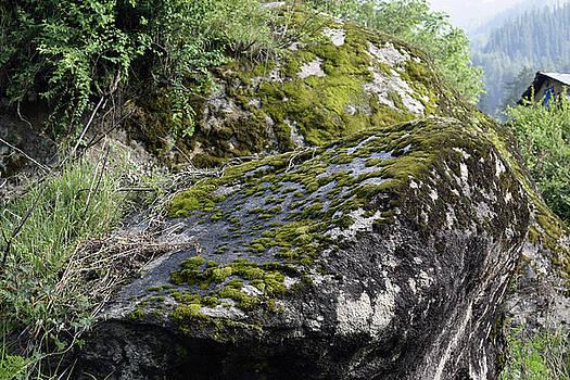 Rock moss by Sumit Mehndiratta