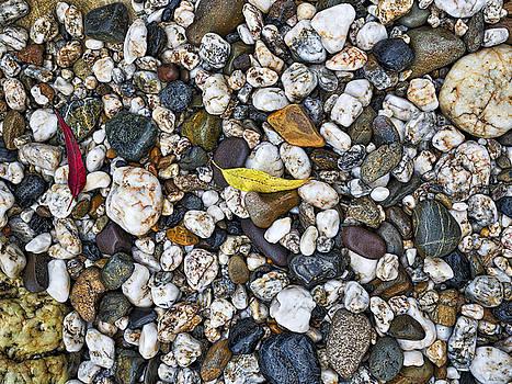 Steven Ralser - Rocks and Leaves - Coastal Australia