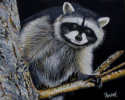 Rocky Raccoon by Ferrel Cordle