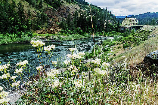 Mick Anderson - Rogue River near Galice