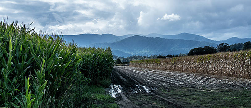 Rogue Valley Corn by Mick Anderson