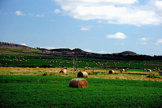 Rolling Pasture by Richard Gehlbach