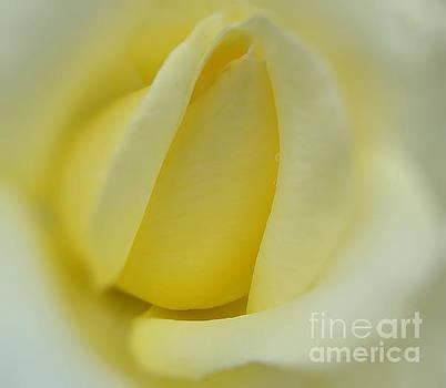 Andrea Kollo - Romancing the Rose