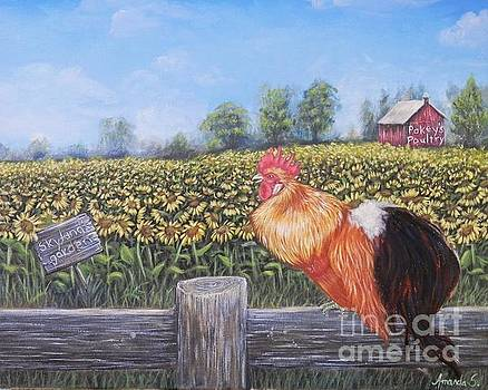 Rooster and Sunflowers  by Amanda Hukill
