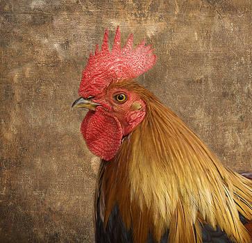 Kim Hojnacki - Rooster