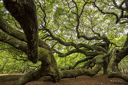 Roots by Bill Cantey