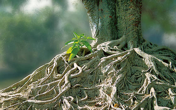 Roots of Life by Subhankar Bhaduri