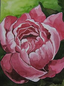 Rose by Akhilkrishna Jayanth