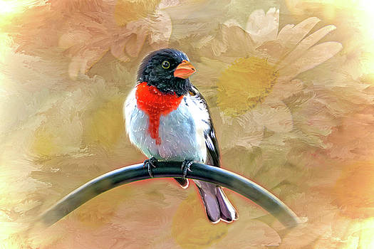 Rose-breasted-Grosbeak by Mary Timman