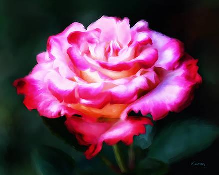 Rose by Johanne Dauphinais