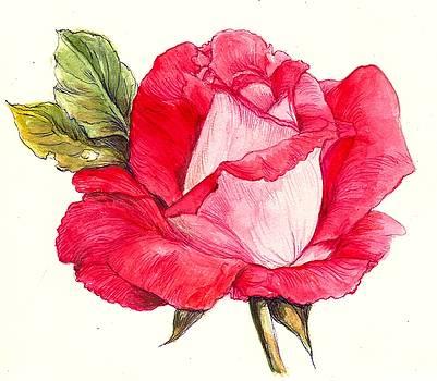 Rose by Morgan Fitzsimons