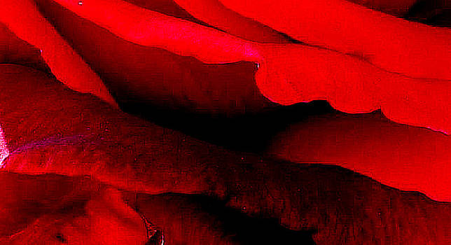 Rose Red by Dana Patterson