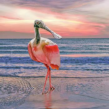 Roseate Spoonbill at sundown  by Brian Tarr