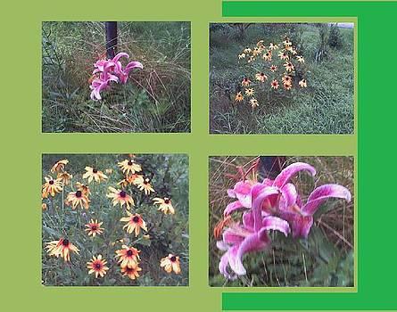 Rosemary's Garden Flowers by Rosemary Mazzulla