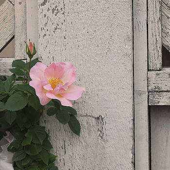 Kim Hojnacki - Roses and Wood