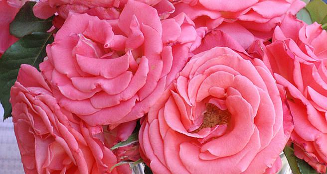 Roses by Gene Garrison