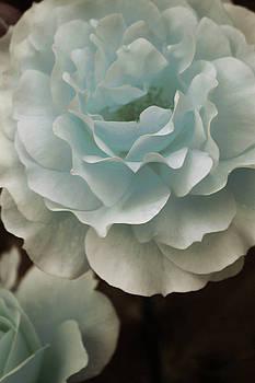 Roses in Love by The Art Of Marilyn Ridoutt-Greene