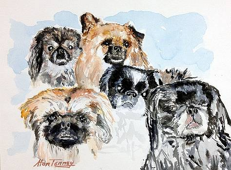 Rose's Pekingese by Stan Tenney