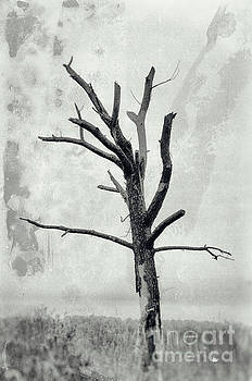 Rotting Away Alone Nature Photography by Melissa Fague