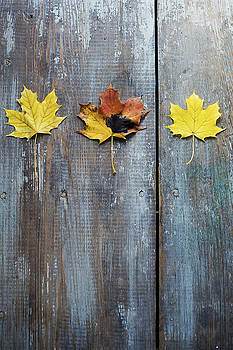 Row of Autumn Leaves on Weathered Wood by Di Kerpan
