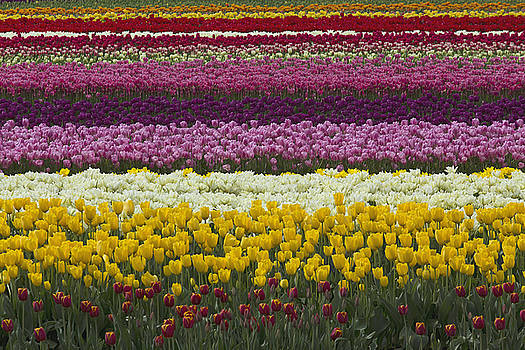 Rows of Color by Bob Stevens