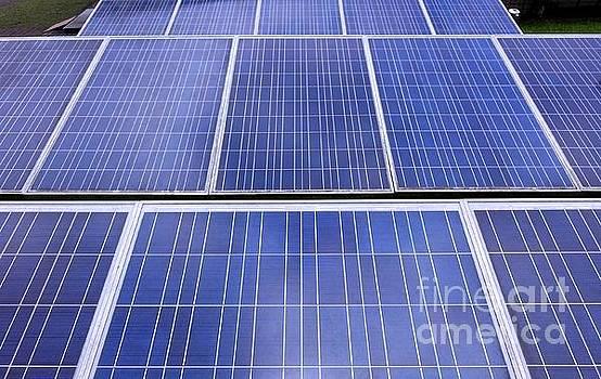Rows of Solar Panels by Yali Shi