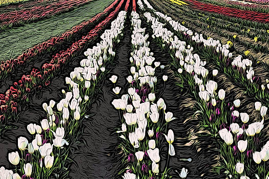 Bonnie Bruno - Rows of Tulips