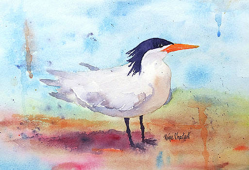 Royal Tern by Renee Chastant