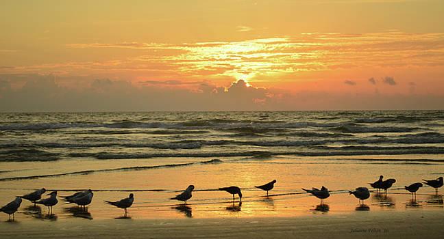 Royal terns at beach sunrise 5-1-16 by Julianne Felton