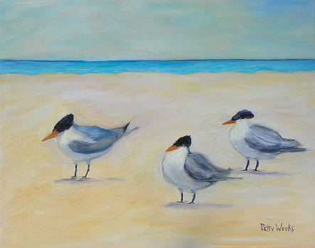 Royal Terns on St. Augustine Beach by Patty Weeks