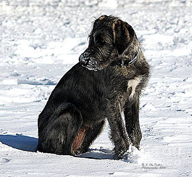 Ruby in the Snow by Ann Butler