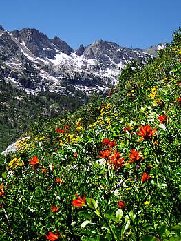 Ruby Mountain Wildflowers - Vertical by Alan Socolik