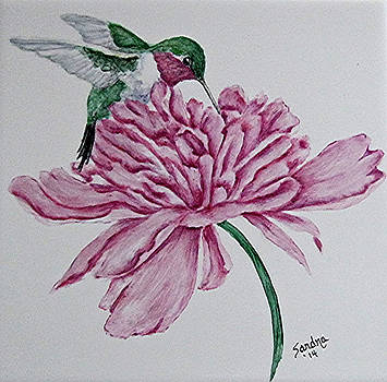 Ruby-throated Hummingbird on Peony by Sandra Maddox