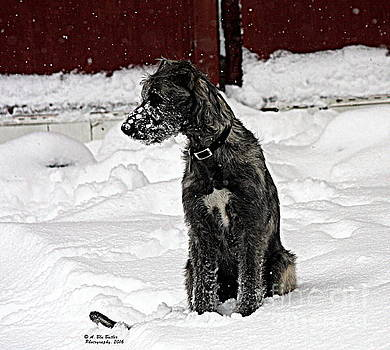 Ruby's first snow by Ann Butler