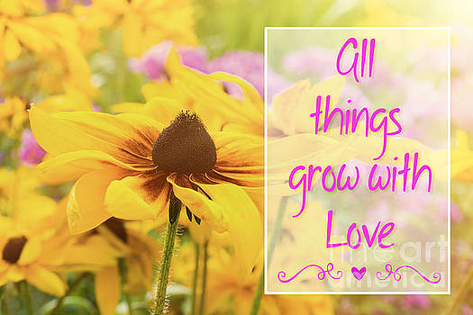 Rudbeckia Love Quote by Verena Matthew