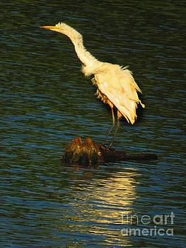 Ruffled Egret by Rrrose Pix