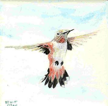 Rufous Hunmmingbird by Dy Witt