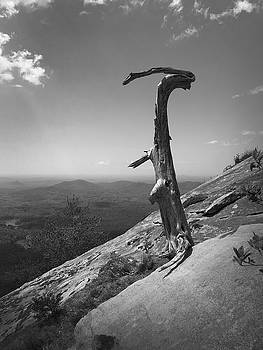 Ruins of a Tree at Table Rock Trail Overlook TWO by Kelly Hazel