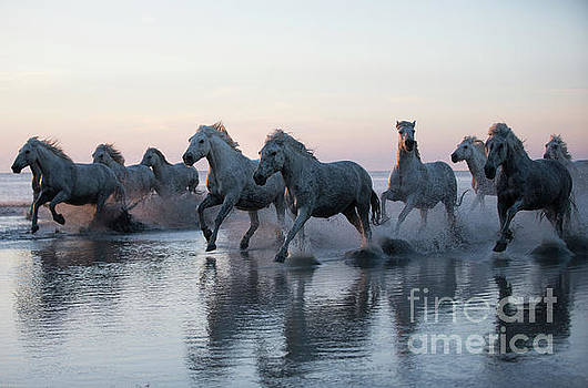 Running into the Sunset by Carol Walker
