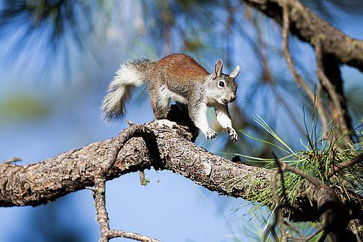 Run,Squirrel run by Ruth Jolly