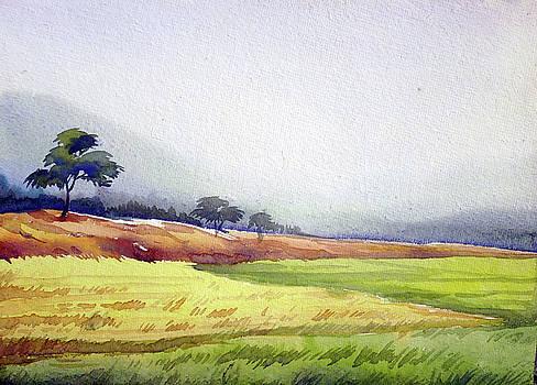 Rural Cornfield  by Samiran Sarkar