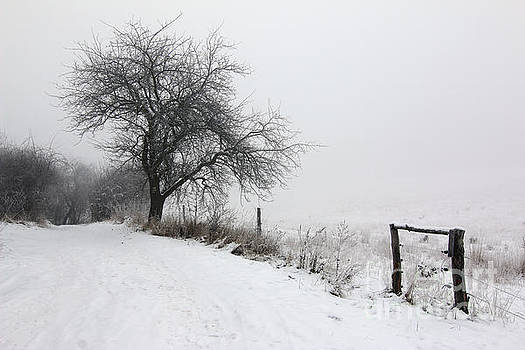 Rural path and leafless tree in winter by Michal Boubin