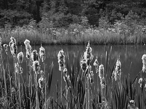 Rushes Barlow fishing lakes by Jerry Daniel
