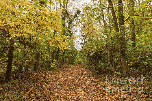 Rustic Path by Ava Reaves