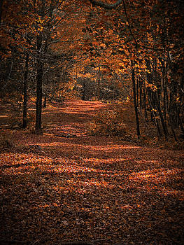 Rustling Pathway by GJ Blackman