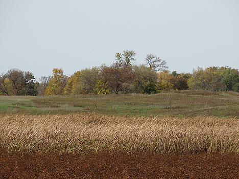 Rusty field by Jon Glynn